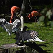 Birds Gather Art Print