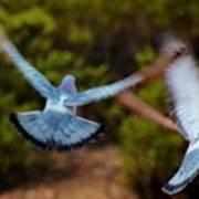Birds In Flight 030515ab Art Print