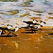 Birds In The Surf Art Print