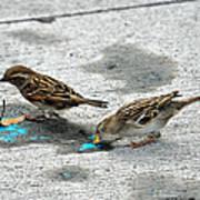 Birds Like Cotton Candy Art Print
