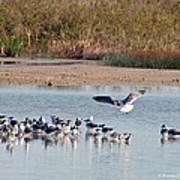 Birds Of Cutler Bay Wetlands 42 Art Print