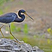 Birds Of Cutler Bay Wetlands 47 Art Print