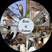 Birds Of Ontario Art Print