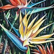 Birds Of Paradise  2   Sold Art Print