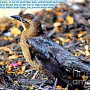 Birds Of The Air Art Print