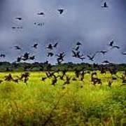 Birds Of The Wetlands V11 Art Print