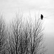 Birds Of Winter I Art Print