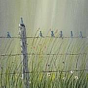 Birds On A Fence Art Print