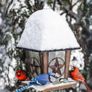 Birds On Bird Feeder In Winter Art Print