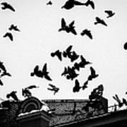 Birds Over City - Featured 3 Art Print