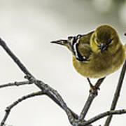 Birdy Birdy Goldfinch Art Print