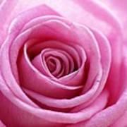 Birthday Pink Art Print