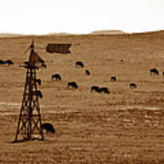 Bison And Windmill Art Print