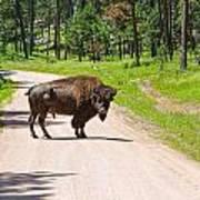 Bison Blocking The Road Art Print