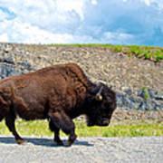 Bison Plodding Along On Alaska Highway-bc-canada Art Print