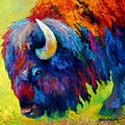 Bison Portrait II Art Print by Marion Rose