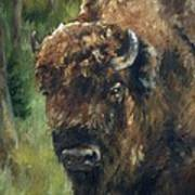 Bison Study - Zero Three Art Print
