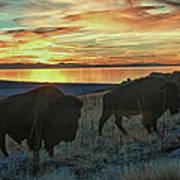 Bison Sunset Art Print