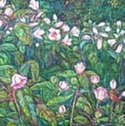 Bisset Park Hibiscus Art Print