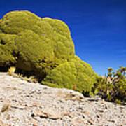 Bizarre Green Plant Bolivia Art Print