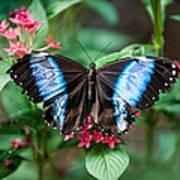 Black and Blue Wings Art Print