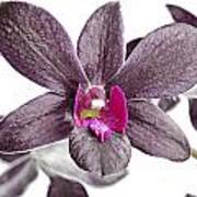 Black And Purple Orchid Art Print