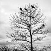 Black And White Blackbirds  Art Print