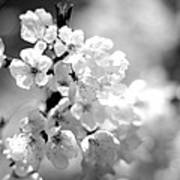 Black And White Blossoms Art Print