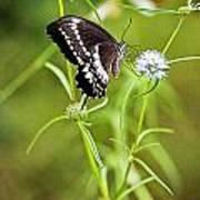 Black And White Butterfly V3 Art Print