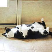 Black And White Cat Reclining Art Print
