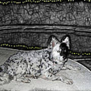Black And White Dog Art Print