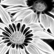 Black And White Florals Art Print