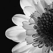 Black And White Flower Art Print