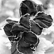 Black And White Maui Flowers Art Print