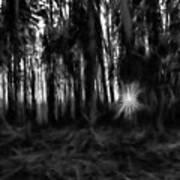 Black And White Monochrome Artistic Painterly Sun Between Trees  Art Print