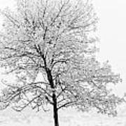 Black And White Square Tree  Art Print