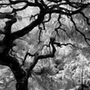 Black And White Tree Art Art Print