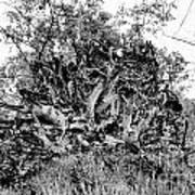 Black And White Uprooted Tree Art Print
