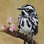Black And White Warbler Art Print