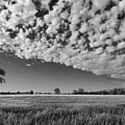 Black And White Wheat Field Art Print