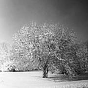 Black And White Winter Art Print by Thomas Fouch