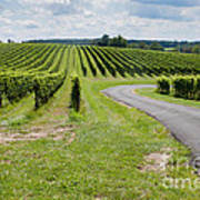 Maryland Vinyard In August Art Print