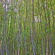 Black Bamboo Heights Art Print