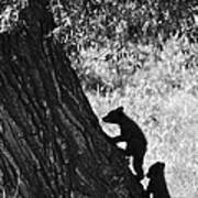 Black Bear Cubs Climbing A Tree Art Print