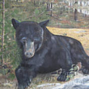 Black Bear - Wildlife Art -scruffy Art Print