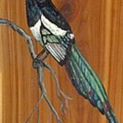 Black Billed Magpie Art Print