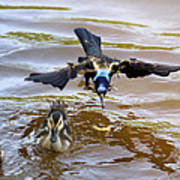 Black Bird On The Water Art Print