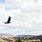 Black Bird In Flight Art Print