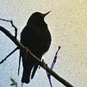 Black Bird Perch Art Print