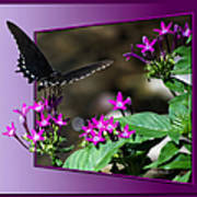 Black Butterfly 07 Art Print